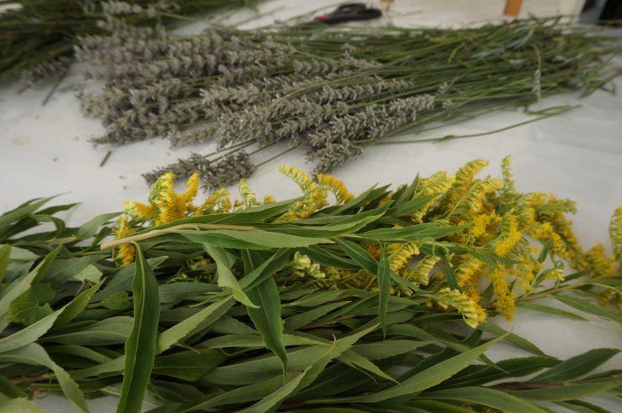 LAVANDE, solidage production plantes bio tarn