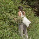 PRODUCTRICE CUEILLEUSE PLANTES MEDICINALES BIO TARN