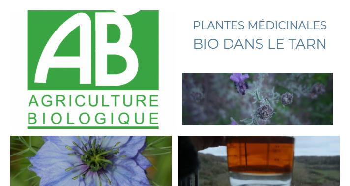 Plantes médicinales bio Tarn Cordes sur ciel