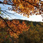 plantes médicinales automne tarn