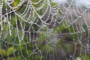 cordes sur ciel plantes médicinales bio tarn
