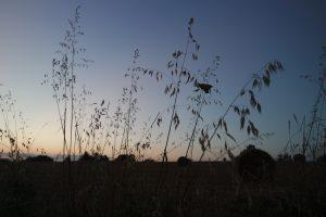 cordes sur ciel plantes médicinales bio tarn avoine sauvage
