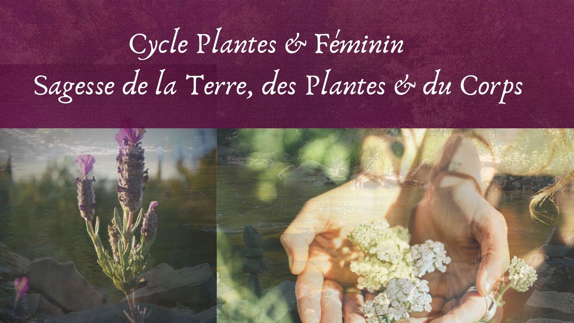 Plantes médicinales & Féminin