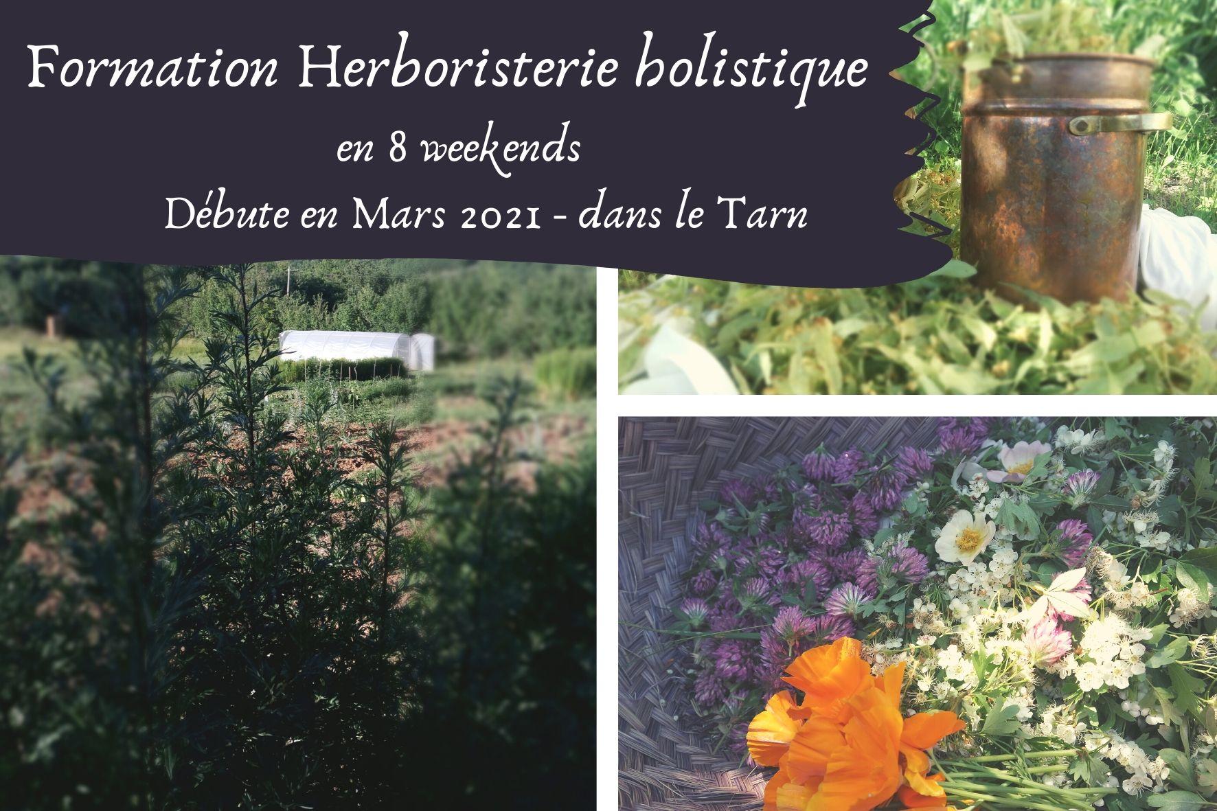 Formation plantes médicinales