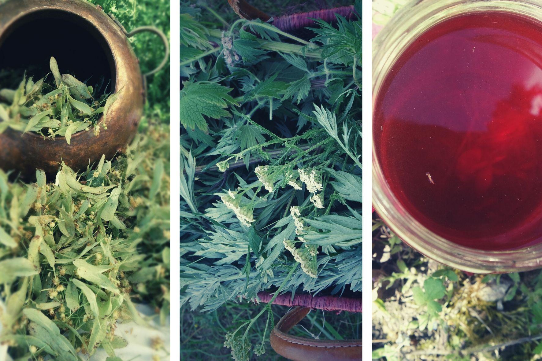 stage plantes médicinales