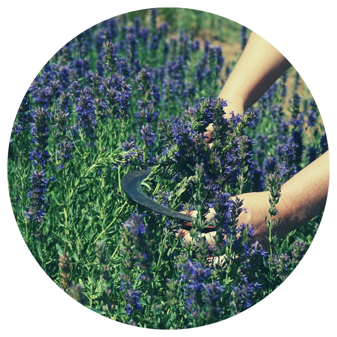 Adeline Mandirac formation herboristerie holistique
