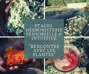 stage herboristerie intuitive a la rencontre des plantes