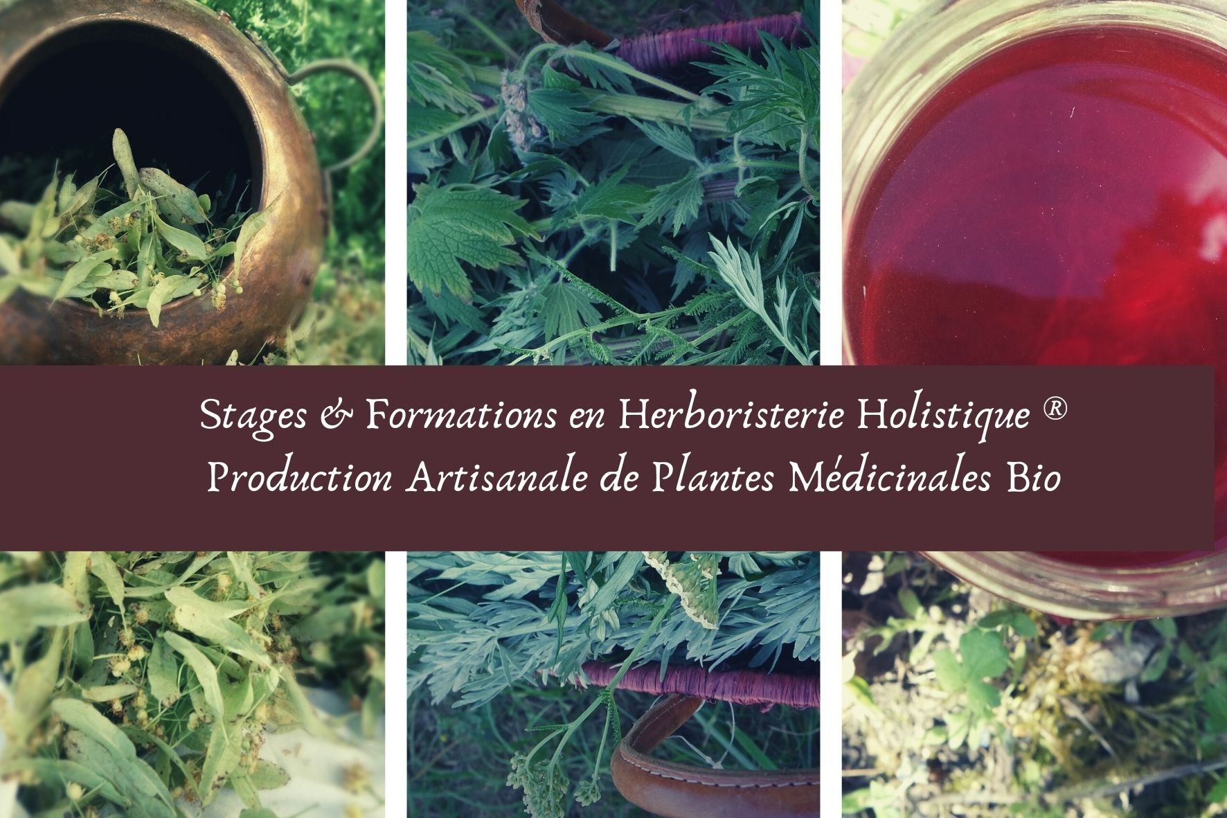 plantes médicinales bio