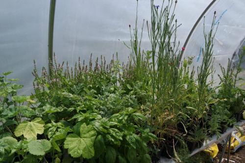 plants de plantes médicinales bio