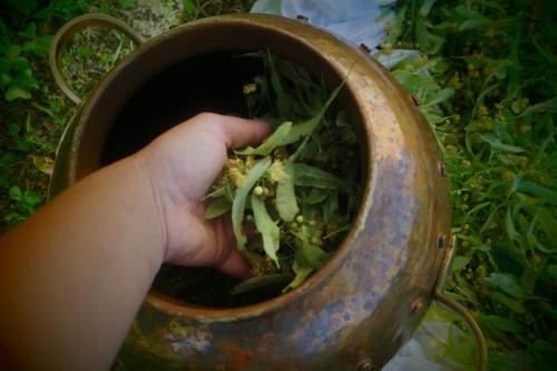 hydrolat de tilleul bio